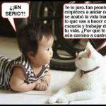 El gato y mi bebé: habla el peludo